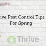 Five Pest Control Tips For Spring