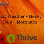 Why Hot Weather Brings Mosquitoes